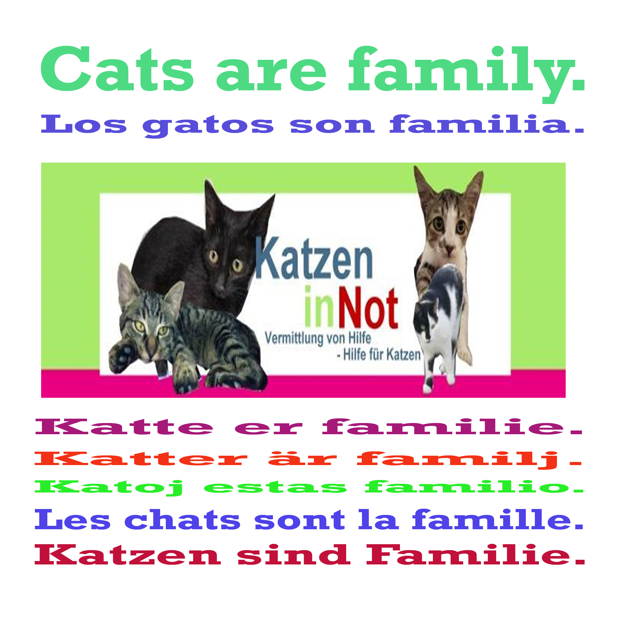 cats are family 101