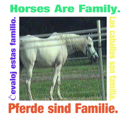 horses are family 101