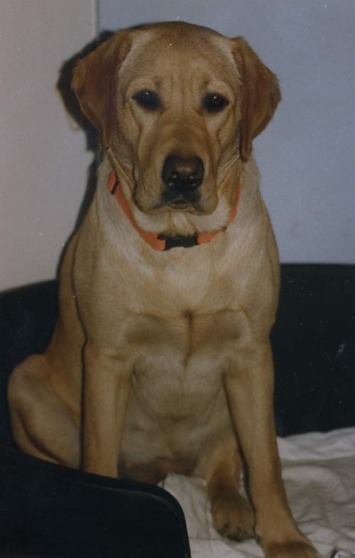 HundeFamilienMK2